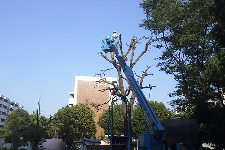 高所での剪定・伐採の例